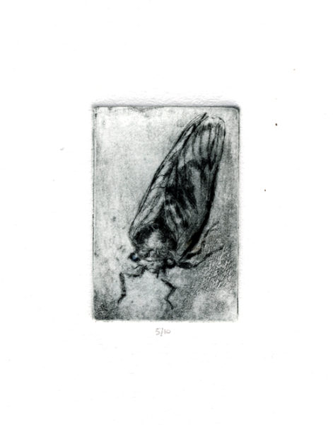 "drypoint of a cicada: ""Big Noise"""